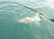 shark-fishing